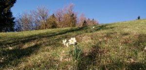 Read more about the article Od doma na Blegoš [Kladje-Škofje-Robidnica-Blegoš]